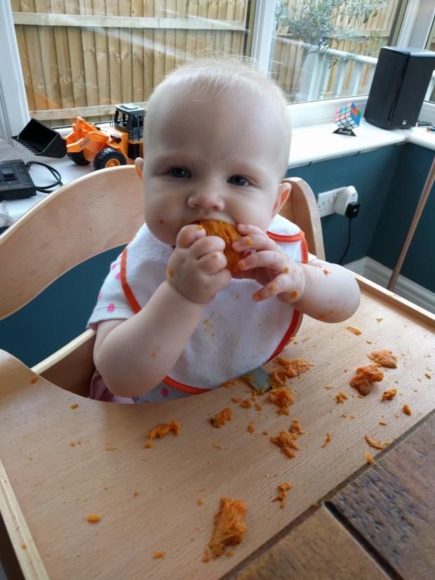 Hauck sweet potato